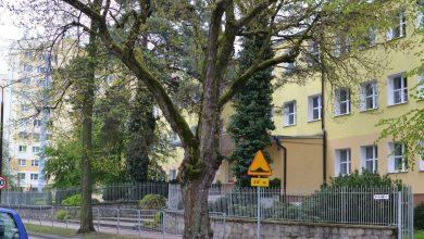 Photo of Wycinka drzew w Puławach