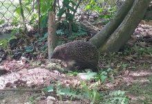 Photo of Kiedy pomagać dzikim zwierzętom?