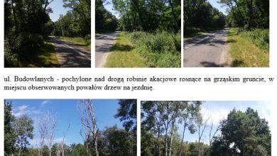 Photo of Będą wycinać drzewa w Puławach