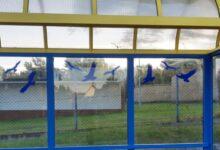 Photo of Puławskie wiaty przystankowe bezpieczniejsze dla ptaków