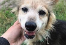Photo of Pomóżmy puławskim zwierzakom!