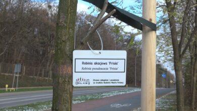 Photo of Nowe nasadzenia drzew w naszym mieście
