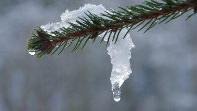 Photo of Zima odpuszcza – zagrożenie roztopami