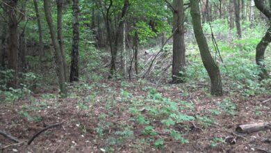 Photo of Makabryczne znalezisko w puławskim lesie [VIDEO]